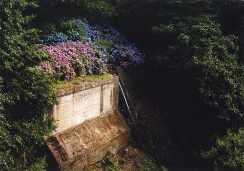 痕跡の上に咲く(高野歩夢,宮城県白石高等学校3年生)